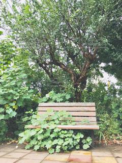 草花がベンチを占領してましたの写真・画像素材[1453942]