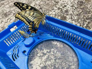 幼虫の成長の写真・画像素材[1387810]