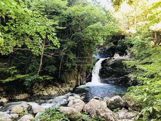 木々 に囲まれた滝の写真・画像素材[1415054]