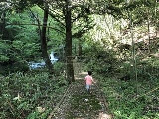 森の中を走るの写真・画像素材[1415686]