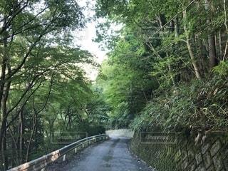 友だちの家からの帰り道の写真・画像素材[1415721]