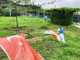 愛知県名古屋市のぶどう狩り園の畑の写真・画像素材[1442748]