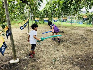 秋集め ぶどう農園ではしゃぐ子どもたちの写真・画像素材[1447502]