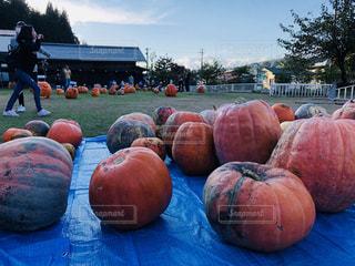 ハロウィンイベントのかぼちゃたちの写真・画像素材[1546705]