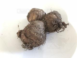 サトイモの写真・画像素材[1606531]