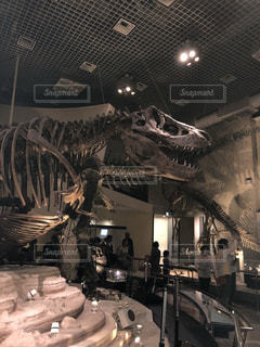 恐竜の化石の写真・画像素材[1385676]