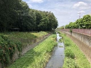 仙川の写真・画像素材[1403157]