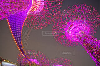 近くに紫の花のアップの写真・画像素材[1387037]