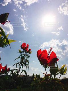 花のように凧の飛行の人々 のグループの写真・画像素材[1392724]