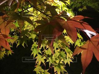 自然の写真・画像素材[257537]
