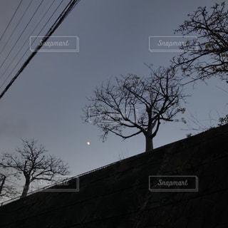 冬の木の写真・画像素材[1388870]