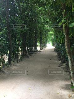 緑の中の道の写真・画像素材[1388993]