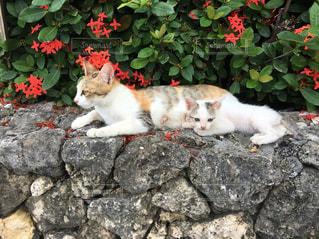 岩の上に座っている猫の親子の写真・画像素材[1388999]