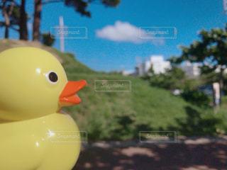 アヒルのシャボン玉の写真・画像素材[1441111]