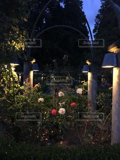 夜のライトアップされた街の写真・画像素材[1389041]