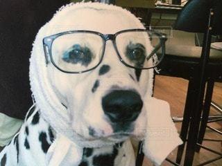 犬の写真・画像素材[43903]