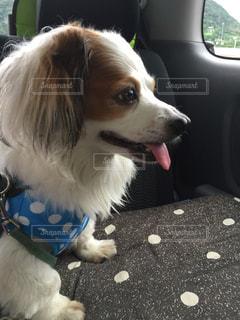 犬の写真・画像素材[135498]