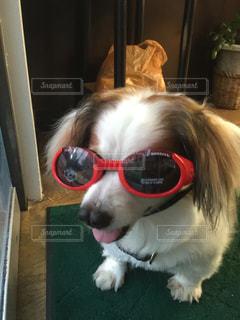 犬 - No.369005