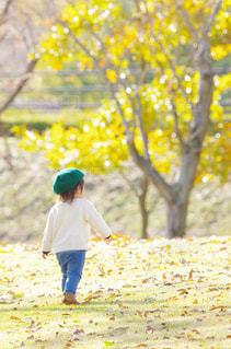 秋の散歩の写真・画像素材[1390029]