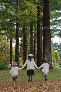 三姉妹 森のお散歩の写真・画像素材[1647353]