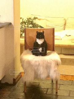 アンティークの椅子の上に座っている猫の写真・画像素材[1389984]
