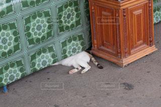 お昼寝猫ちゃんの写真・画像素材[1430711]
