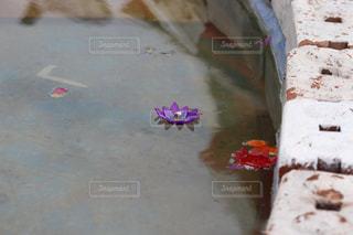 水に浮かぶキャンドルの写真・画像素材[1432304]