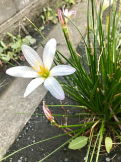 お花の写真・画像素材[1454296]