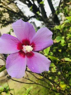 植物にピンクの花の写真・画像素材[1457347]