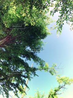 木と空の写真・画像素材[1560132]