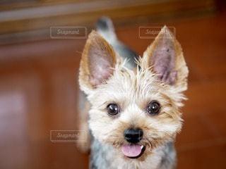 犬の写真・画像素材[44256]