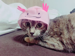 ウーパールーパー猫の写真・画像素材[1391170]