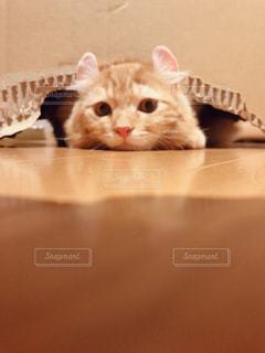 横になって、カメラを見ている猫の写真・画像素材[1391418]