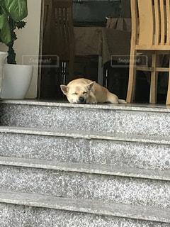 地面に横たわっている犬の写真・画像素材[1391582]
