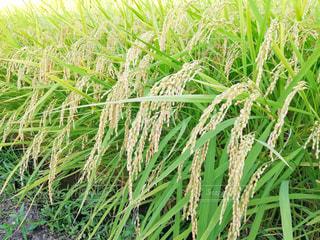 緑の植物の写真・画像素材[1396356]