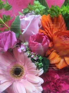花の写真・画像素材[44042]