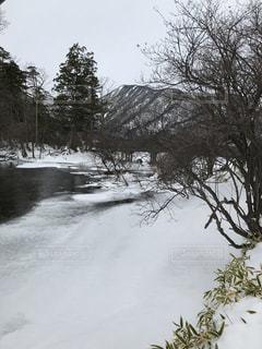 近くに池のアップの写真・画像素材[1392975]