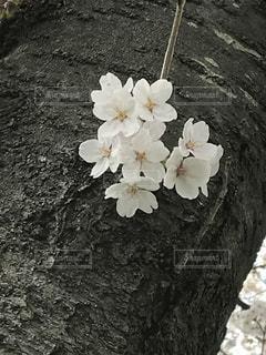 近くの花のアップの写真・画像素材[1392988]