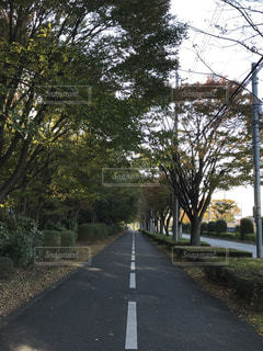 初夏の通学路の写真・画像素材[1394426]