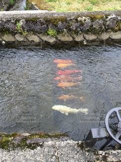 リアル鯉のぼりの写真・画像素材[1394236]
