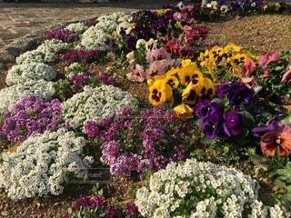 お花畑の写真・画像素材[44065]