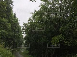 森林の写真・画像素材[66684]