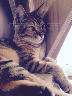 ベッドの上で横になっている猫の写真・画像素材[1394203]