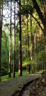木漏れ日の林道の写真・画像素材[1394457]