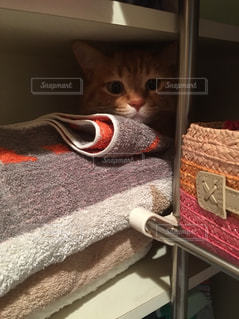 隠れる猫の写真・画像素材[1394804]