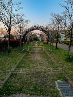 夕暮れの公園の歩道の写真・画像素材[2094734]