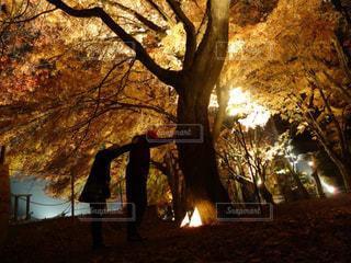 日没の前にツリーの写真・画像素材[1408244]