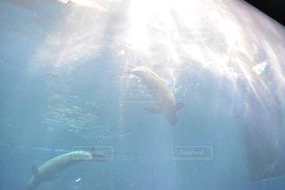 光の海の写真・画像素材[1397271]