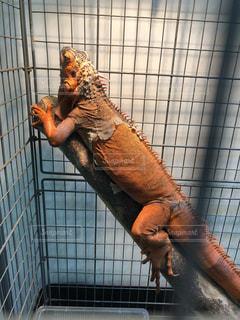 爬虫類の写真・画像素材[1396247]