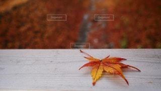 自然の写真・画像素材[44474]